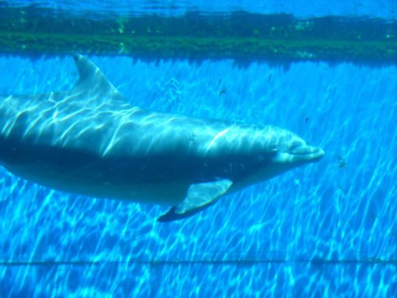 Delfini 10