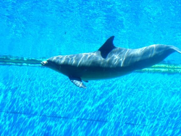 Delfini 2