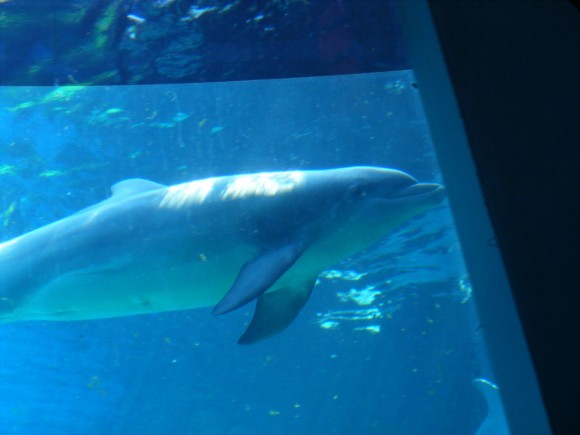 Delfini 6