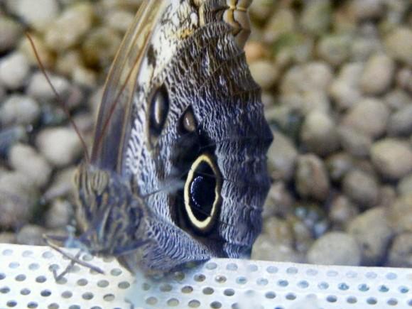 Mariposas 3