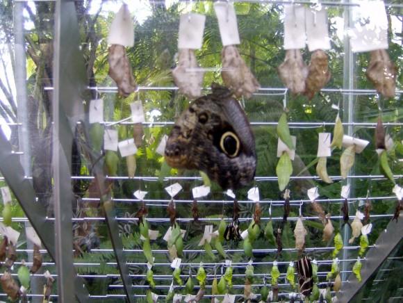 Farfalle 8