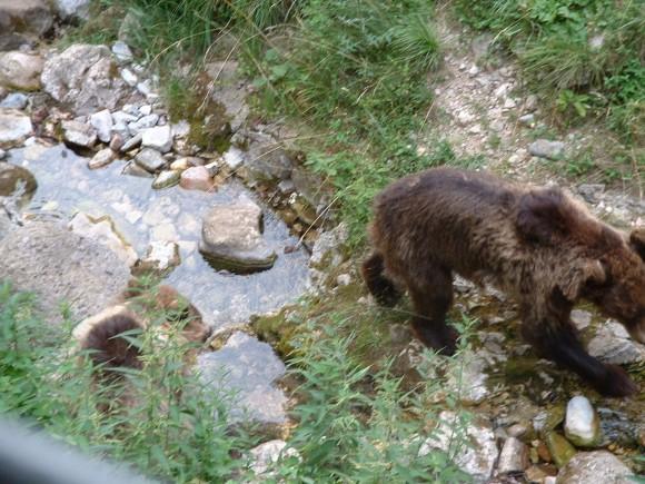 Bears 14