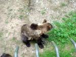 Bears 10
