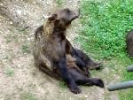 Bears 11