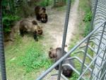 Bears 7