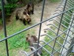 Bears 8
