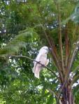 Parrot 9