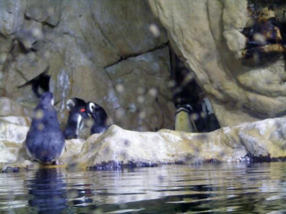 Pinguinos 6