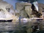 Pinguini 9