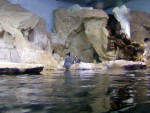 Penguins 9