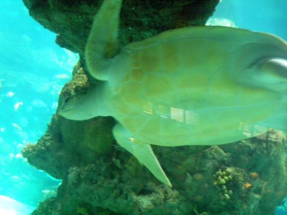 Tortuga marina 2