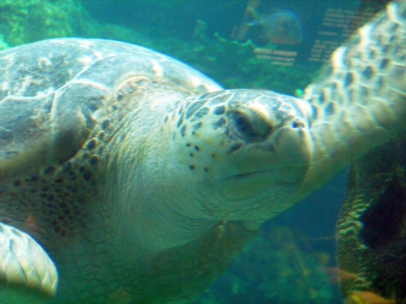 Tartaruga marina 3