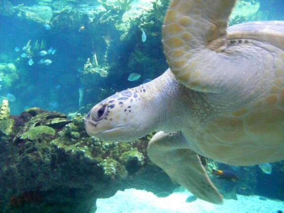 Tartaruga marina 4