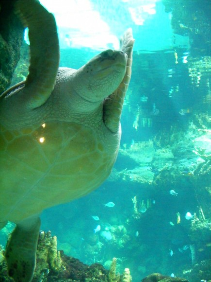 Sea turtle 9