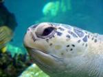 Tartaruga marina 5