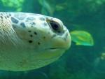 Sea turtle 6