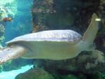 Tartaruga marina 7