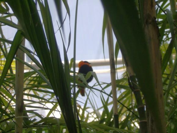 Uccelli 9