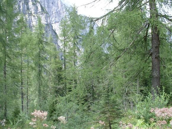 Dolomiti (Spormaggiore) 4