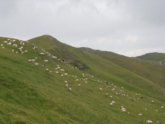 Montagna - Prato Nevoso 1