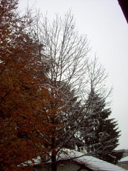 Neve 3