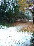 Neve 11