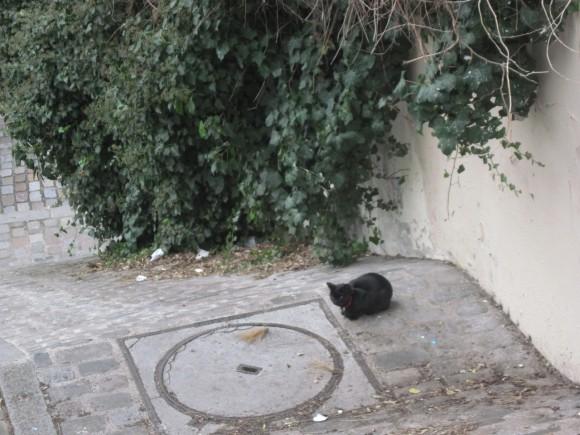 Mont Matre - Gatto nero