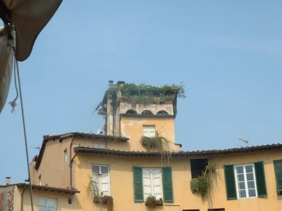 Toscana - Lucca 17