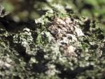 Corteccia di pino 01