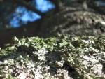 Corteccia di pino 02