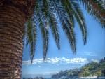 All ombra di una palma (Mantiuk06)