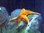 Stella di Mare 4