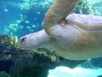 Sea turtle 10
