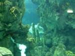 Sea turtle 12