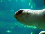 Sea turtle 8