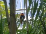 Uccelli 10