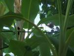 Uccelli 6