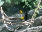 Uccelli 7