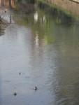 fiume 3